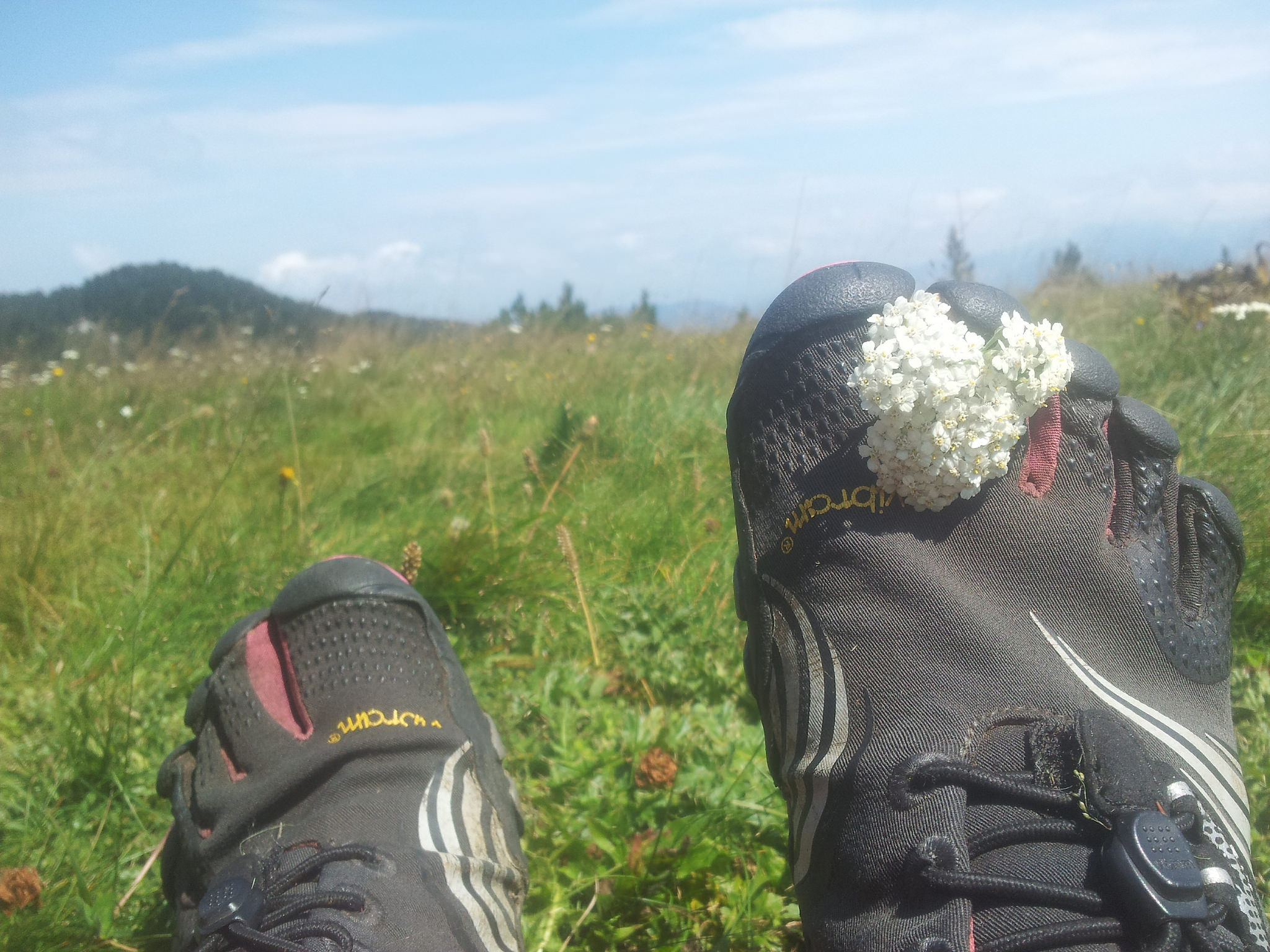 catching_flowers_Čvrsnica_FiveFingers
