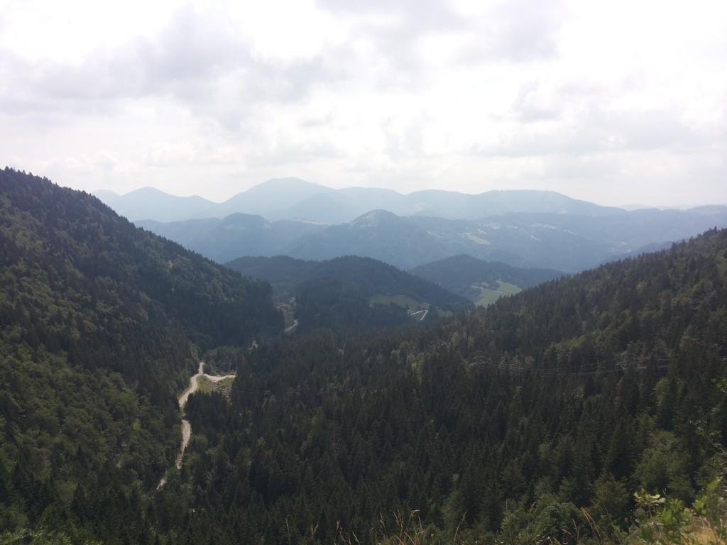 Triglav forest
