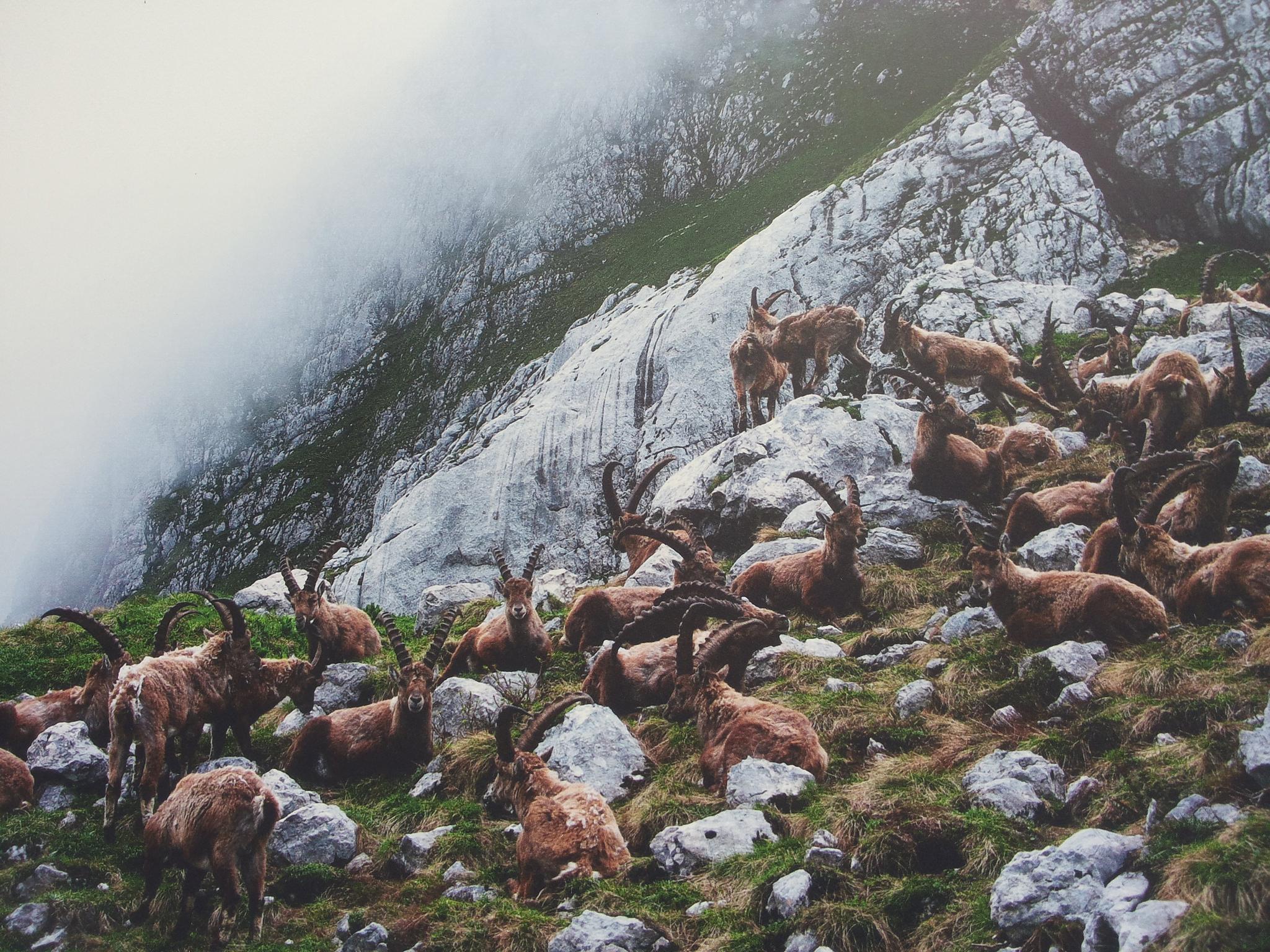 Some wildlife