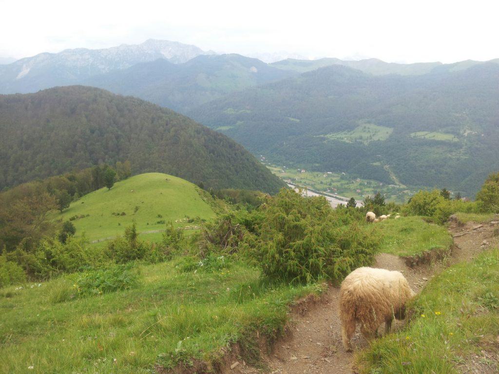 Above Vermosh where I met the sweet shepherd lady, Drande