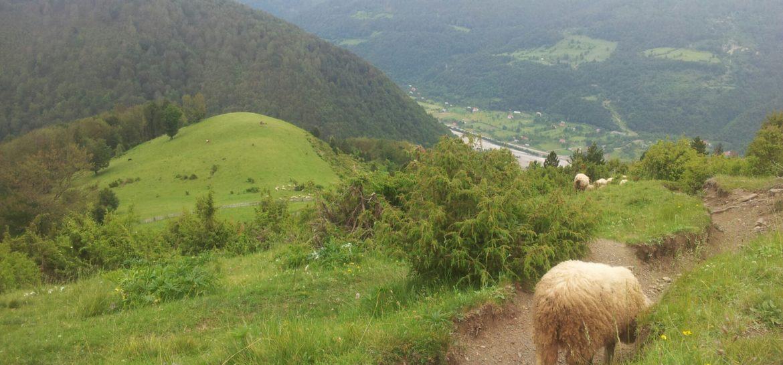 BLOG | Drande de schapenhoedster