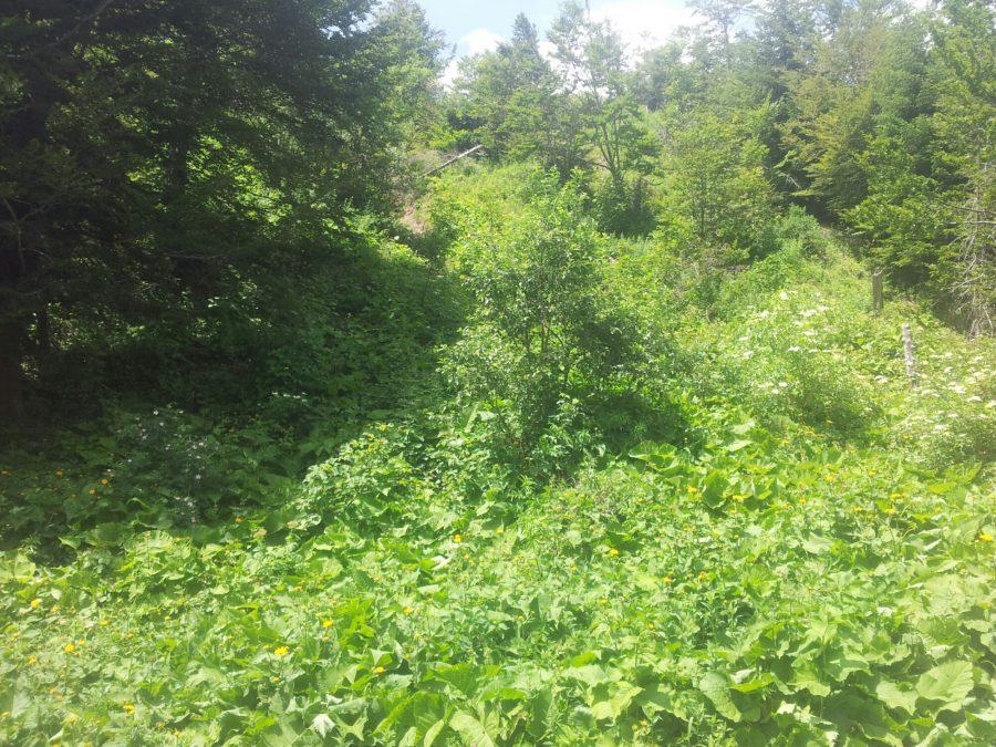 Ongerepte wildernis in Albanië