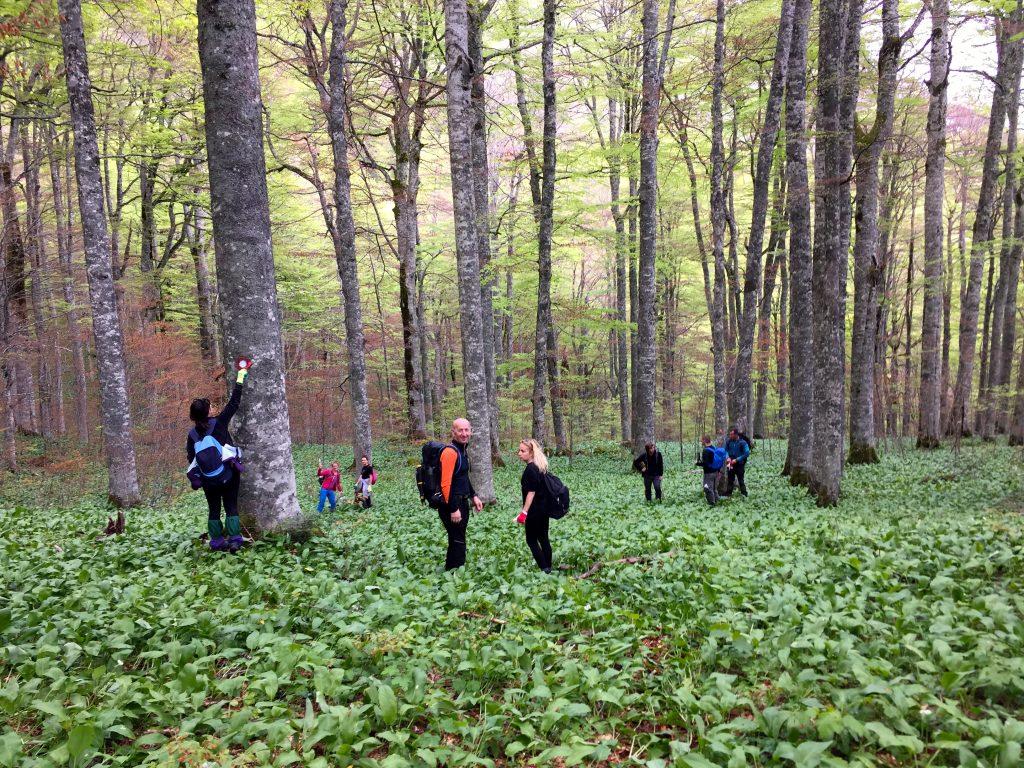 Markering op de bomen aanbrengen in Sutjeska National Park