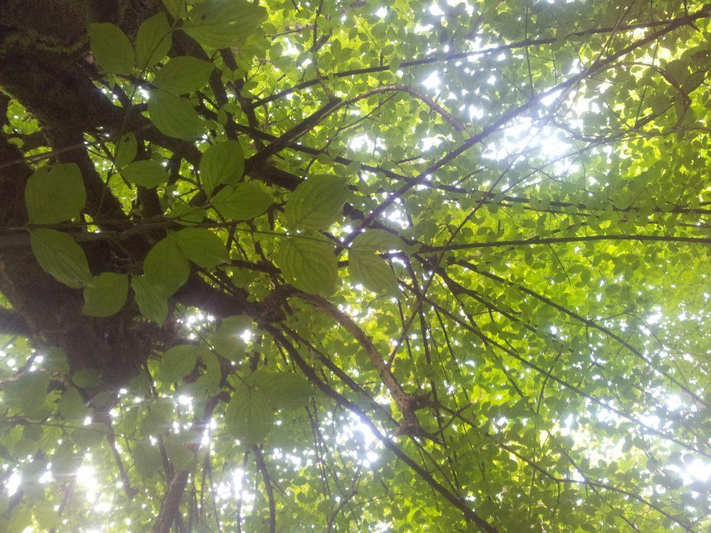 LOST on the VIA DINARICA #hikerstale | EVA's Life & Adventure Jounal