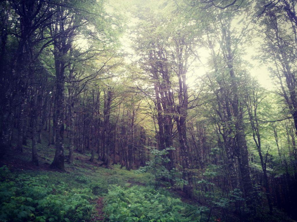 De bossen van Zelengora | Drup drup natte mist