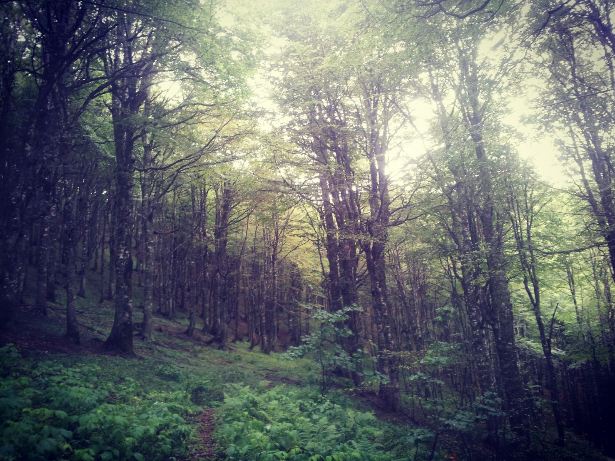 De bossen van Zelengora