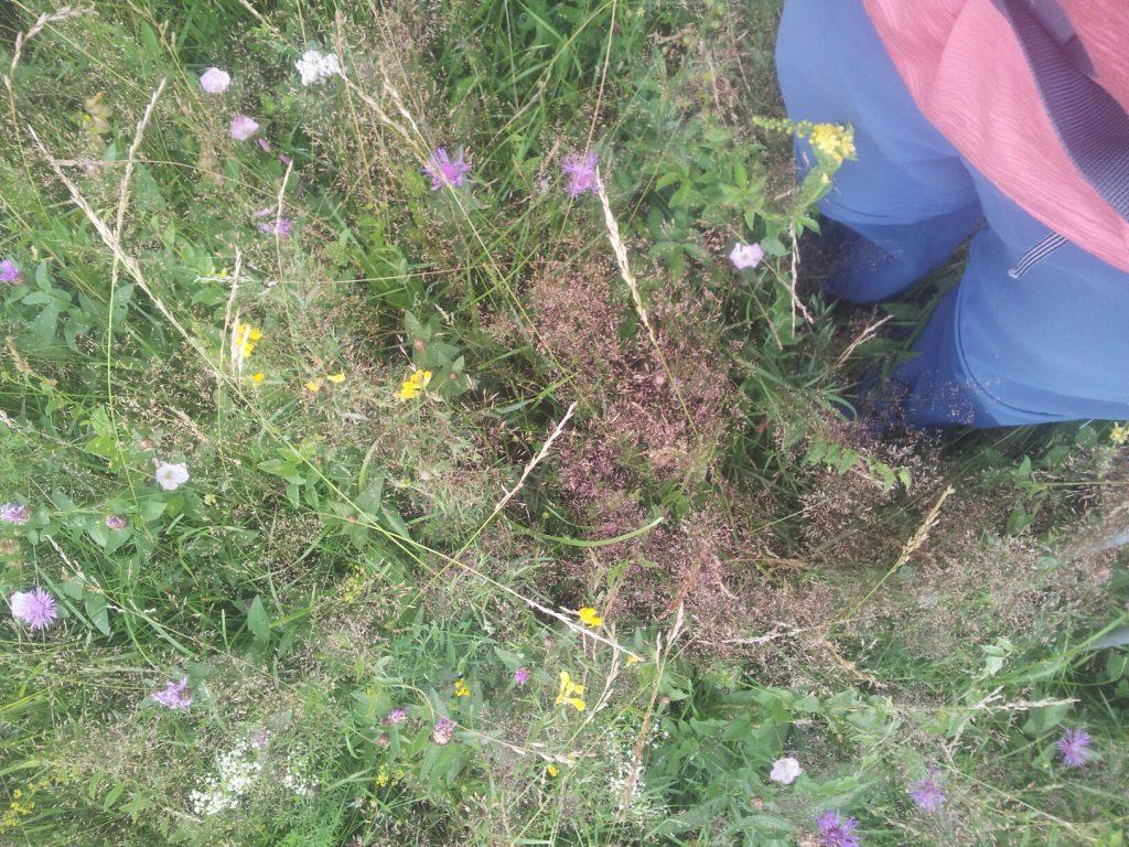 Vibram FiveFingers   Door het gezellige gras