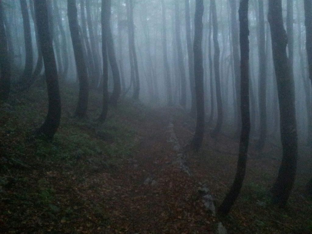 Sweet spooky early morning mist | VELEBITSKI PLANINARSKI PUT