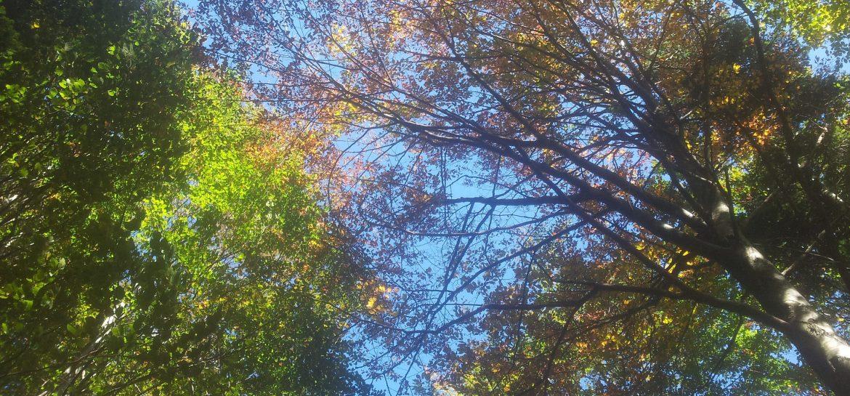 BLOG   Een kleurrijke herfstwandeling door de bossen van Sviščakih