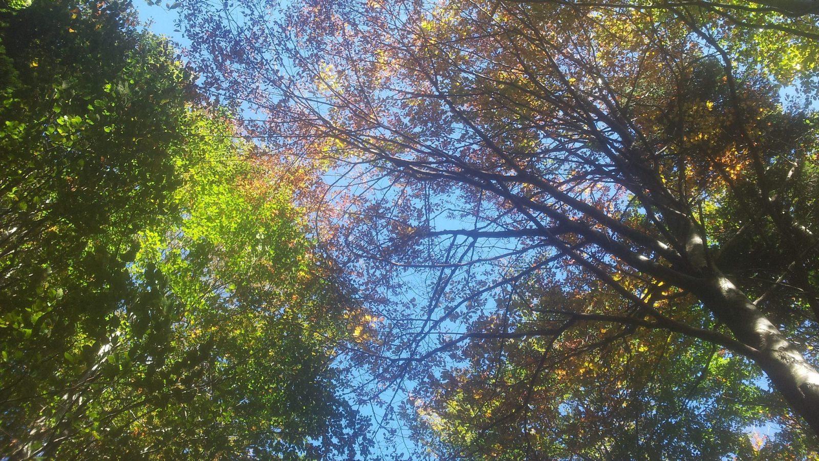 BLOG | Een kleurrijke herfstwandeling door de bossen van Sviščakih