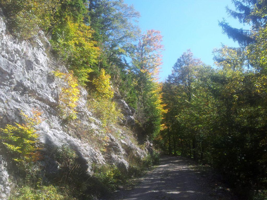 Kleurrijk_wandelen_door_de_bossen_van_Mašun
