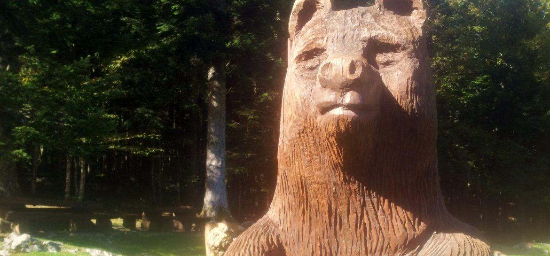 BLOG   Beren bomen en kettingzagen