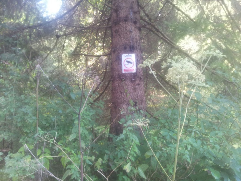 trees-trees-trees-samarske-stijene-croatia-via-dinarica-white-trail