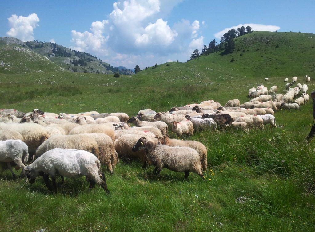 Sinjajevina, Mountains of Montenegro