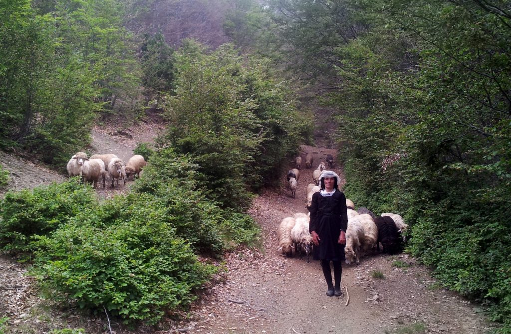 Drande and her sheep | HIKING VIA DINARICA WHITE TRAIL
