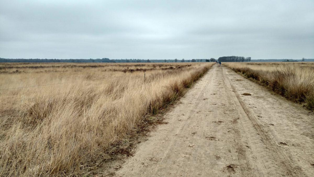 Dwingelderveld_Drenthe_Nederlandse_natuur