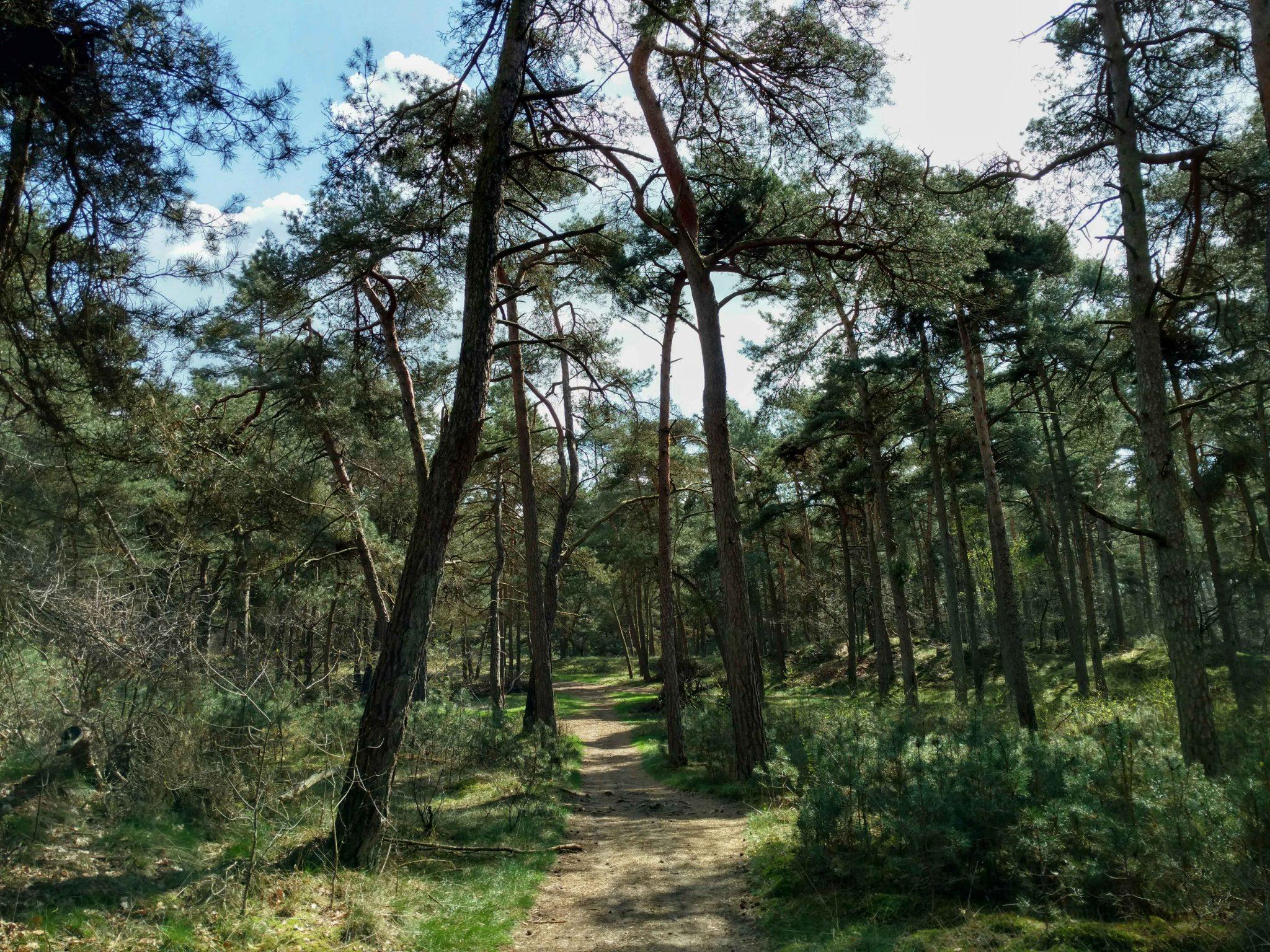 Natuur_in_nederland_pelgrimspad