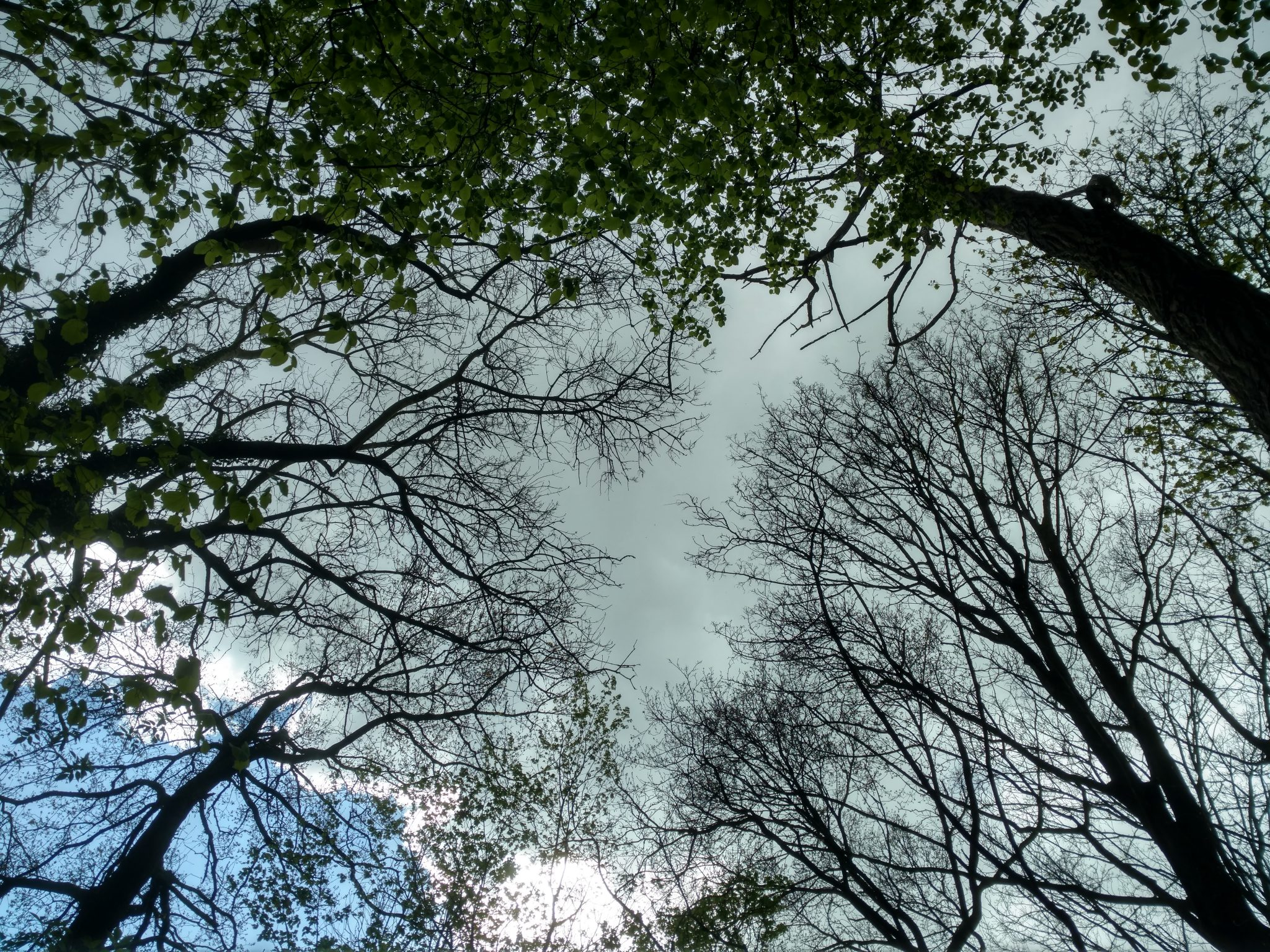 Dutjesuitzicht | Het wel en wee van een wandelaar
