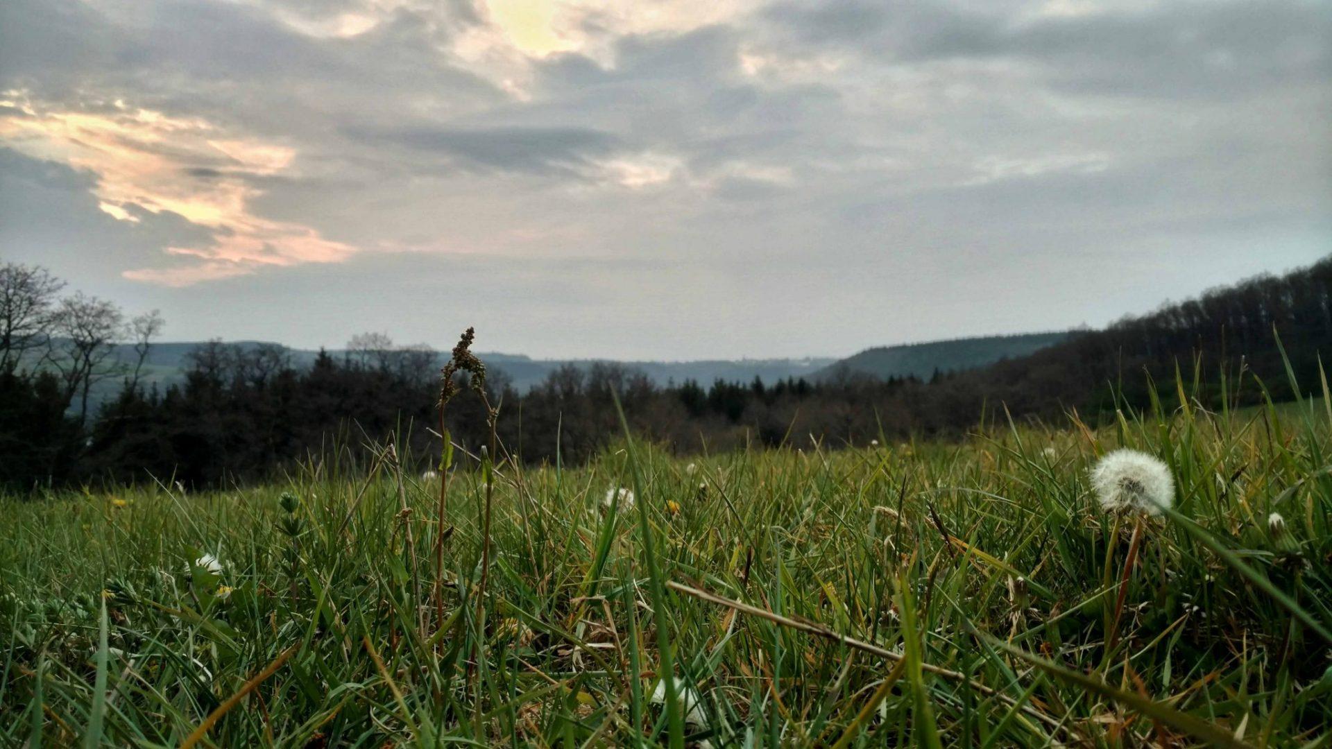BLOG | In het veld