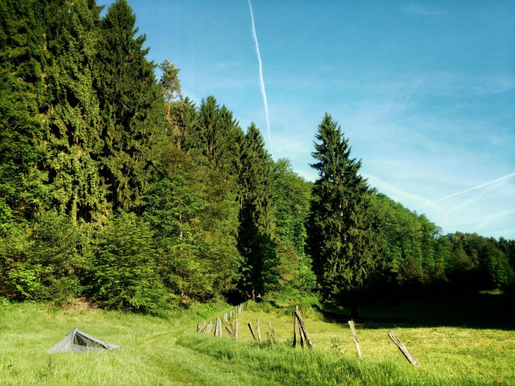 Wildkamperen ergens in Duitsland MET zwijnen | Een vrouw in het wild tussen de zwijnen