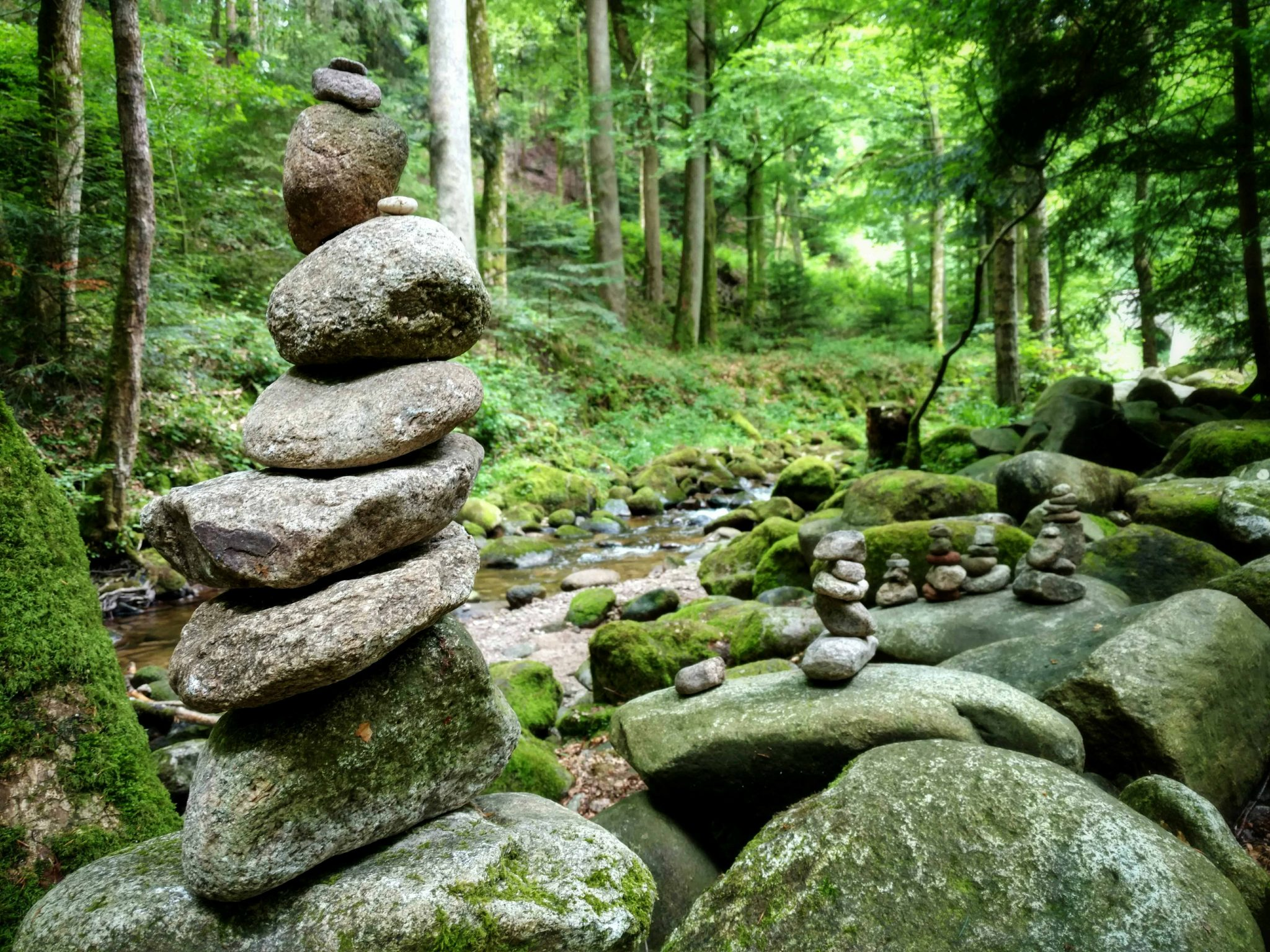 Groene wildernis | Een vrouw in het wild