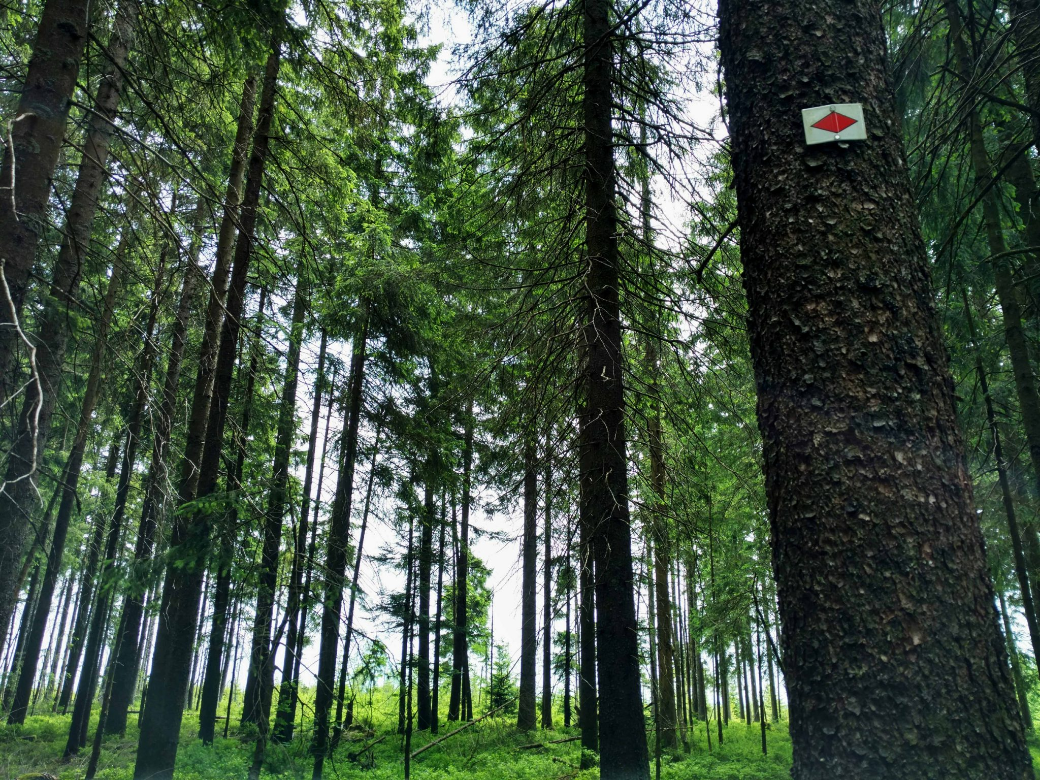 Westweg_schwarzwald