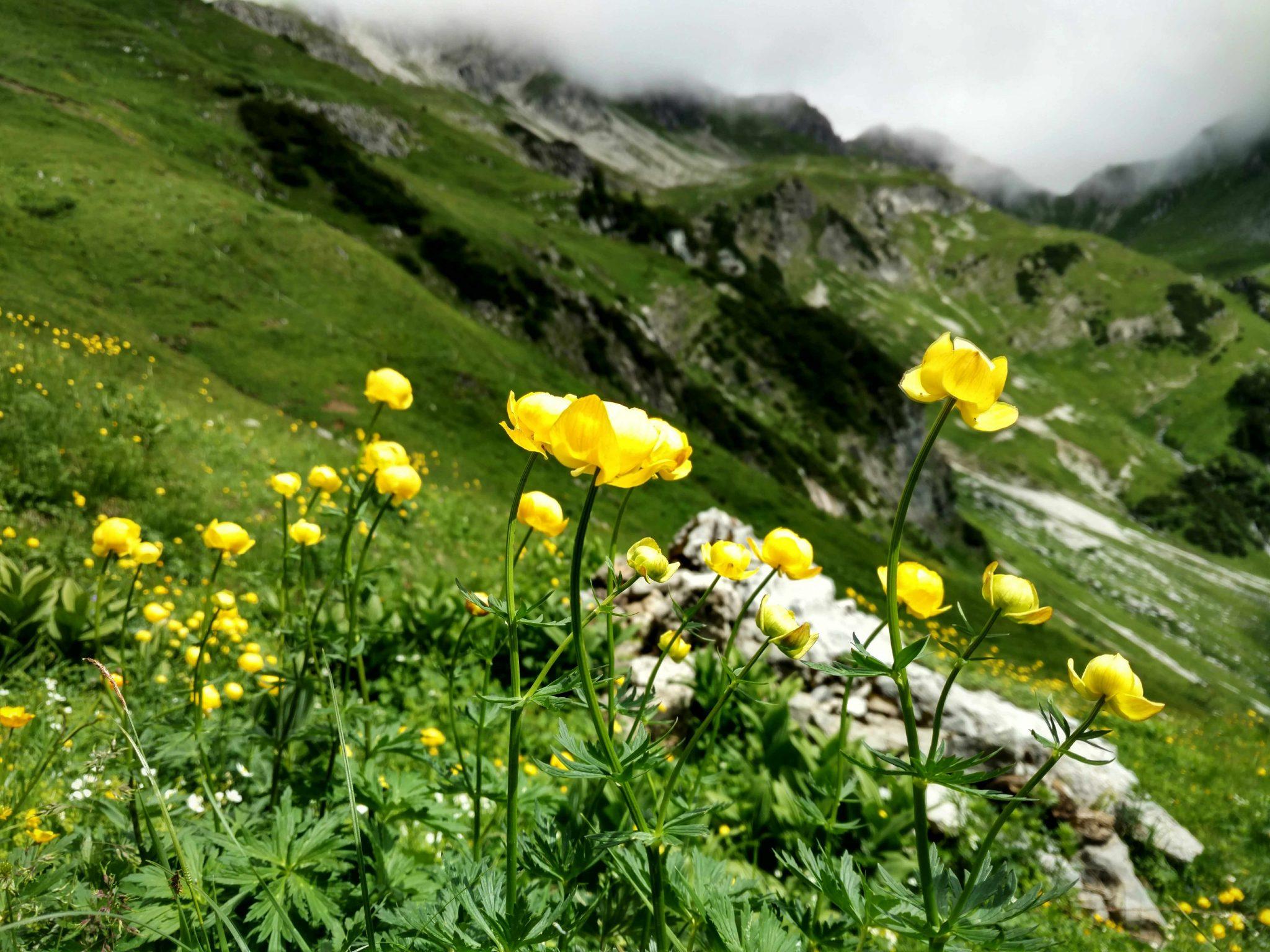 Voralberg_walsertal_via_alpina_austria
