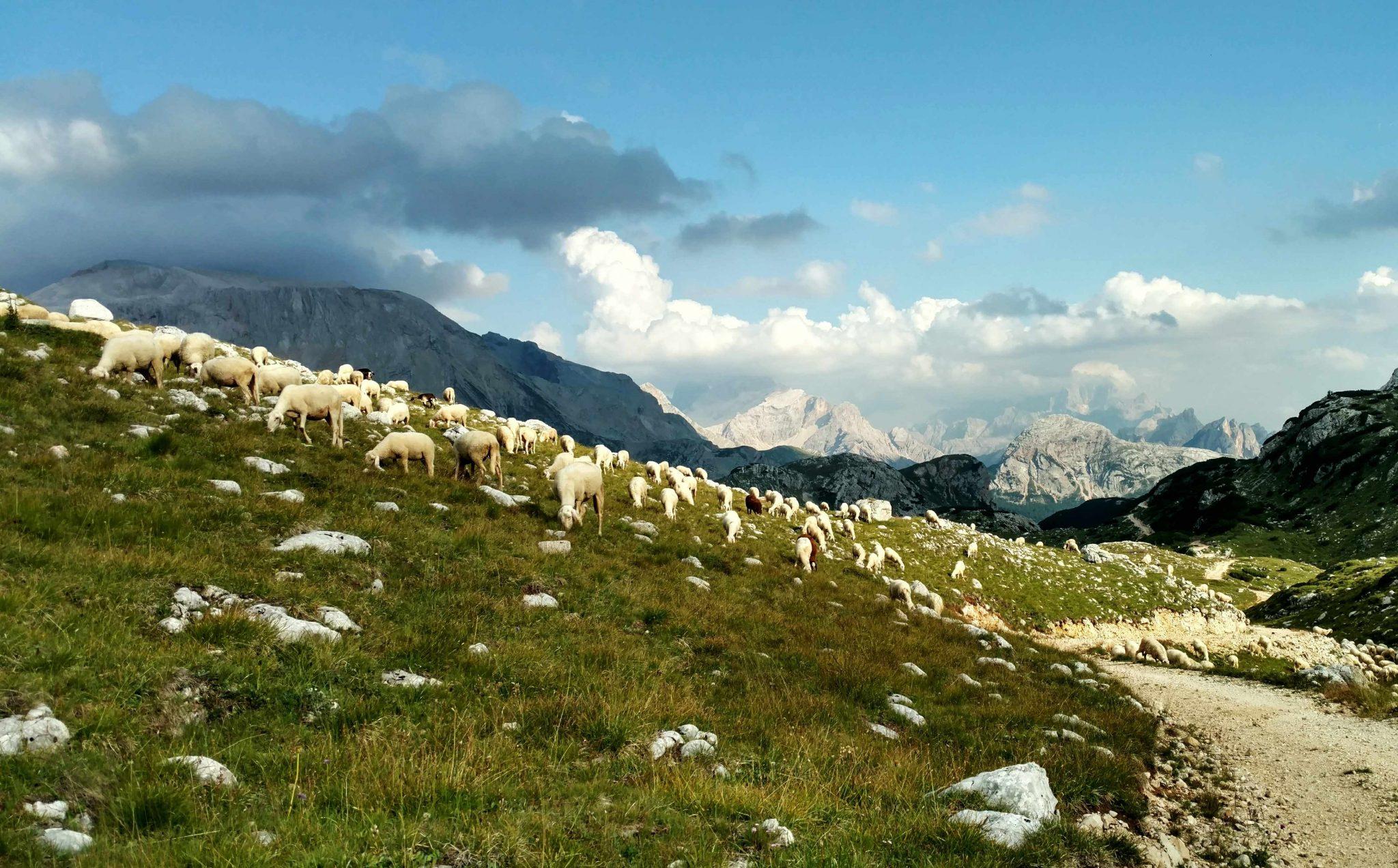 Schapies schapies schapies, Dolomiti Superski!