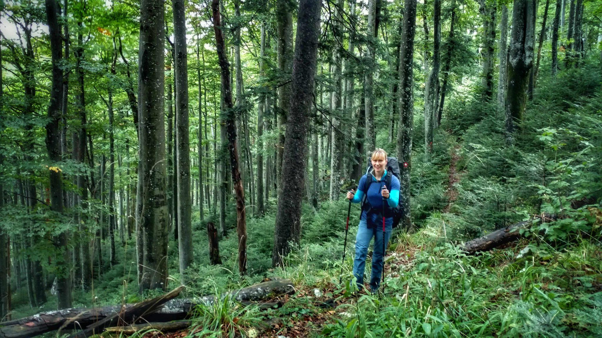Bos_via_dinarica_green_trail_kroatië