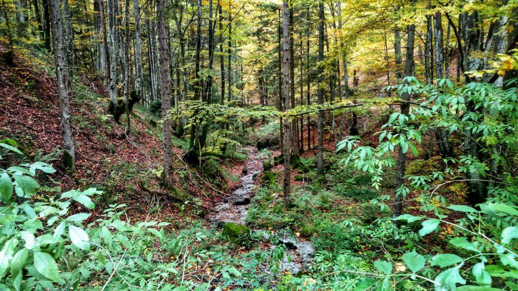 Bossen | Via Dinarica van Zelenkovac naar Šibovi