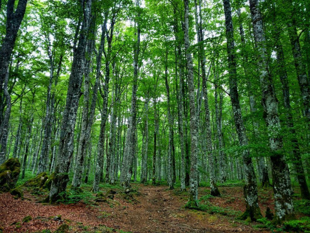 Wandel pad door het bos | Dinara - Troglav - Kamešnica Traverse | Put Oluje | Via Dinarica Alternatieve route in Kroatië