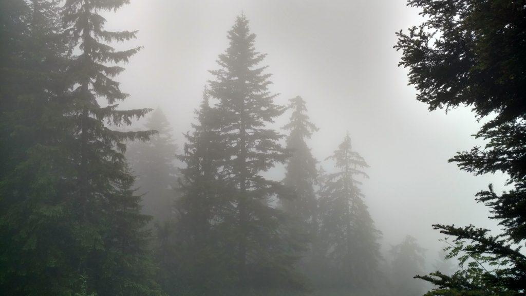 BLOG   Mud and Mist on the Jahorina Trailrun Track   Romanija mountain BOSNIA AND HERZEGONIA