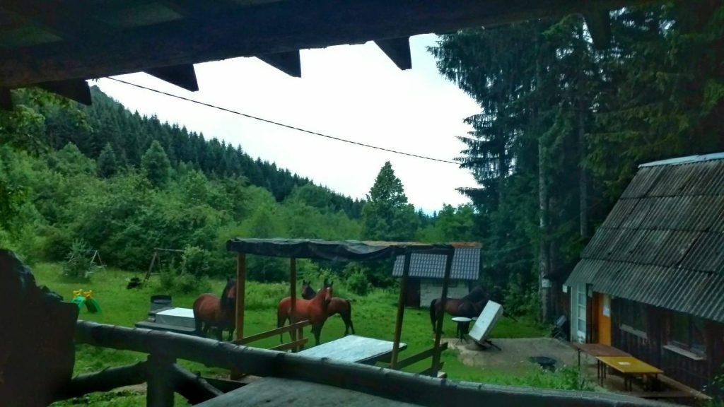 Wilde paarden bij de berghut op Trebević