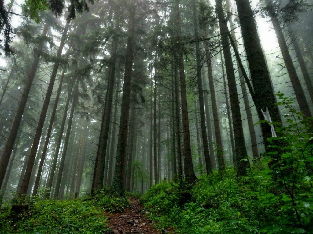 Wandelpad door het mistige bos op Trebević | Green Trail in Bosnië en Herzegovina