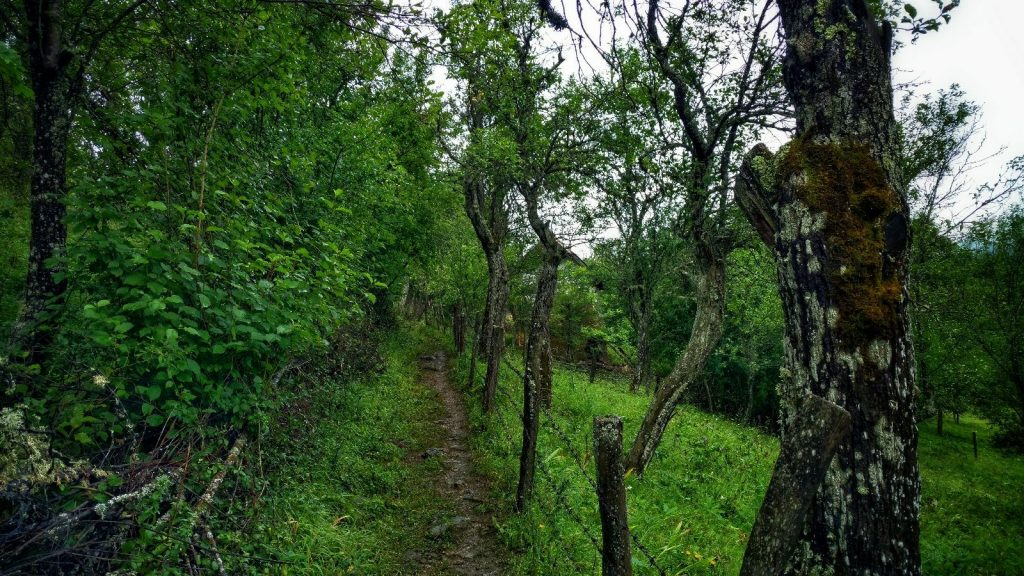 HIDDEN GREEN TRAIL | hike from Višegrad to Tara National Park
