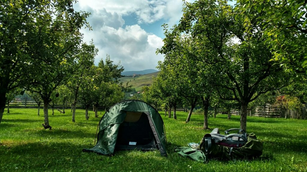 Camping between pear trees
