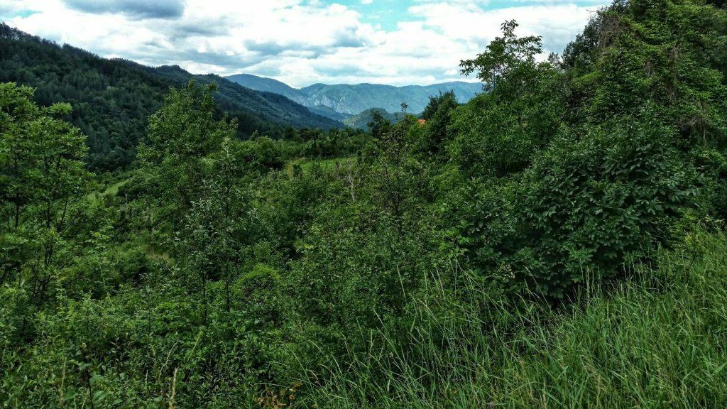 Groen uitzicht over groene bossen op de groene route