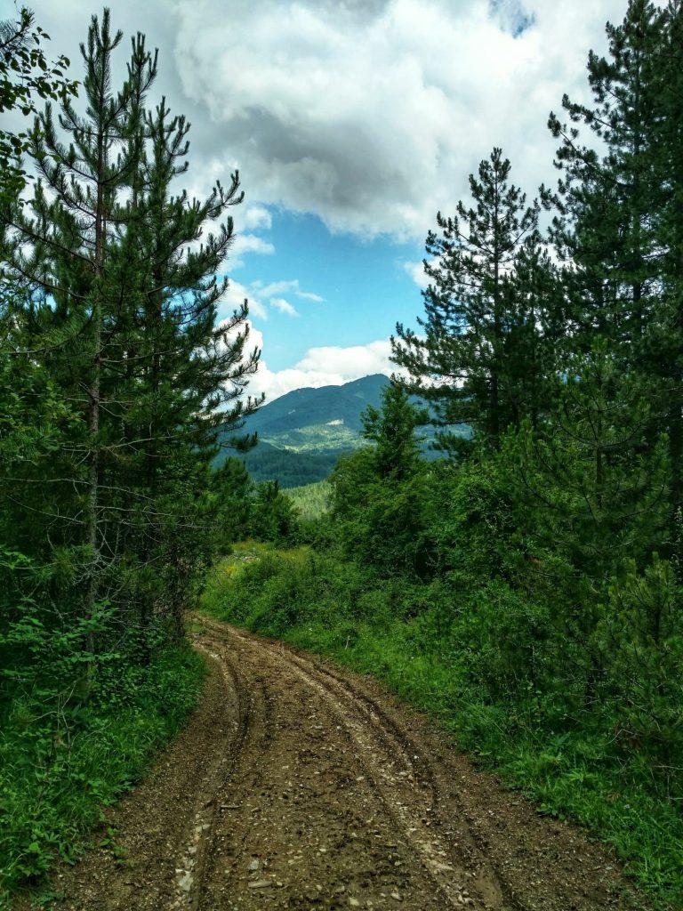 Karrespoor op blubberweg | Via Dinarica Green Trail in Bosnië en Herzegovina