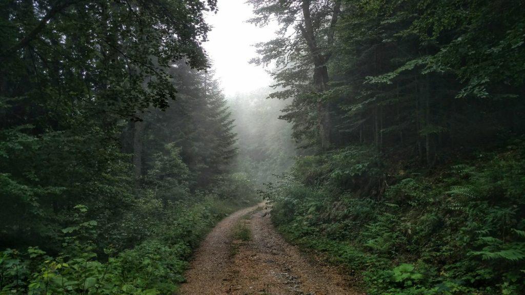 Modderpad in het bos - Via Dinarica Green Trail