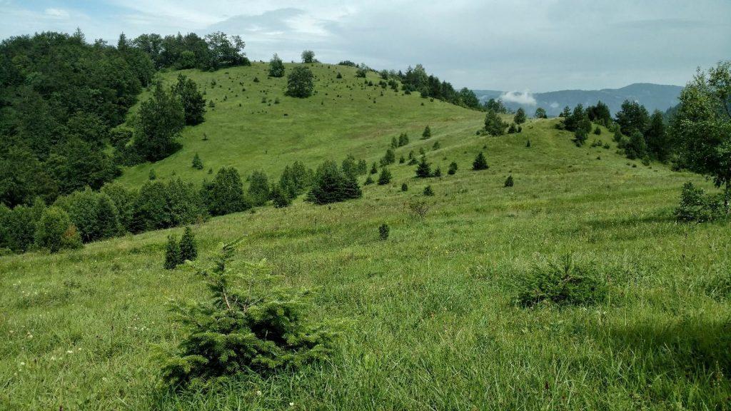 Wandelen over de groene heuvels zonder gemarkeerde route
