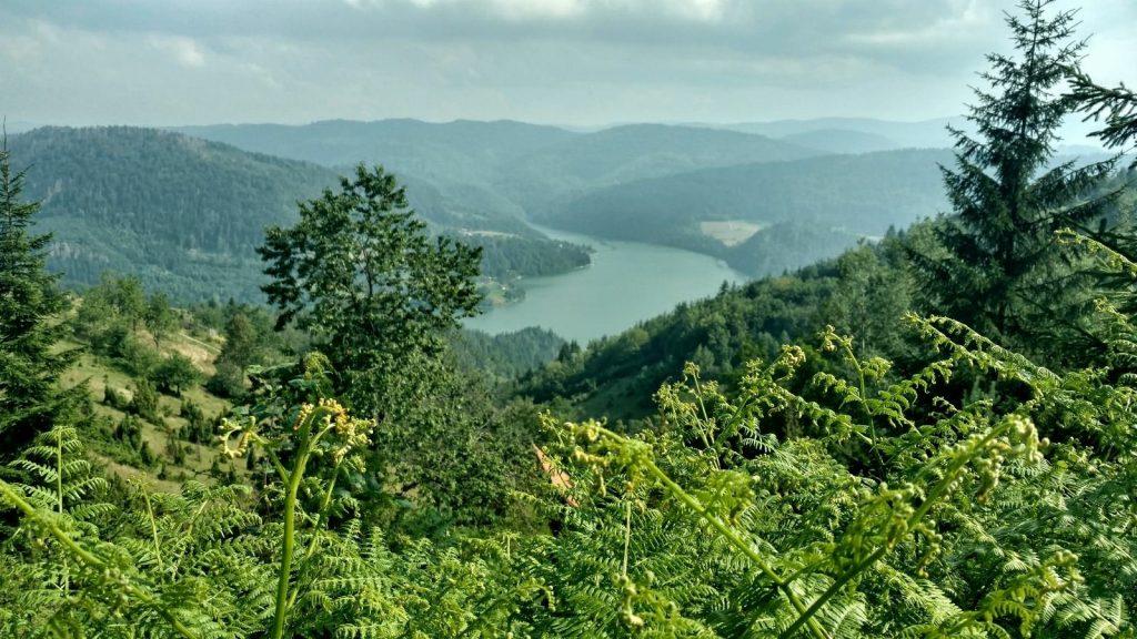 Uitzicht op de Zlatibor of een andere rivier in Servië