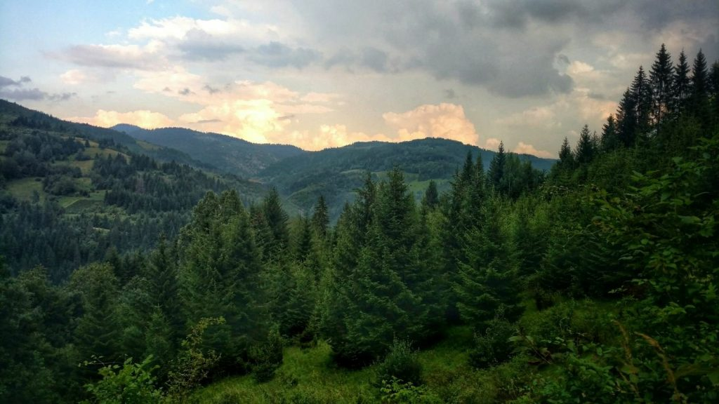 Groene bossen op de green trail in Servië