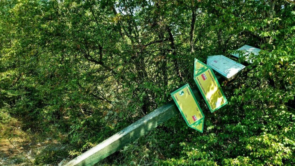 Sightseeing Ohrid | overgrown trail