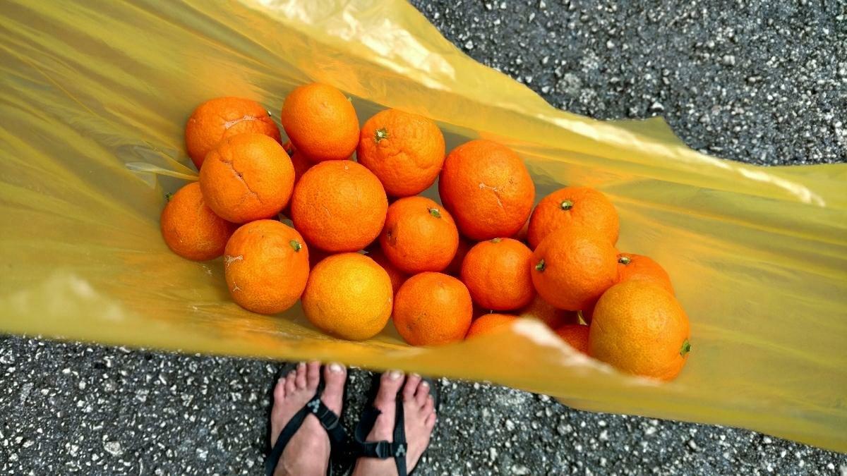 Pelješac mandarins