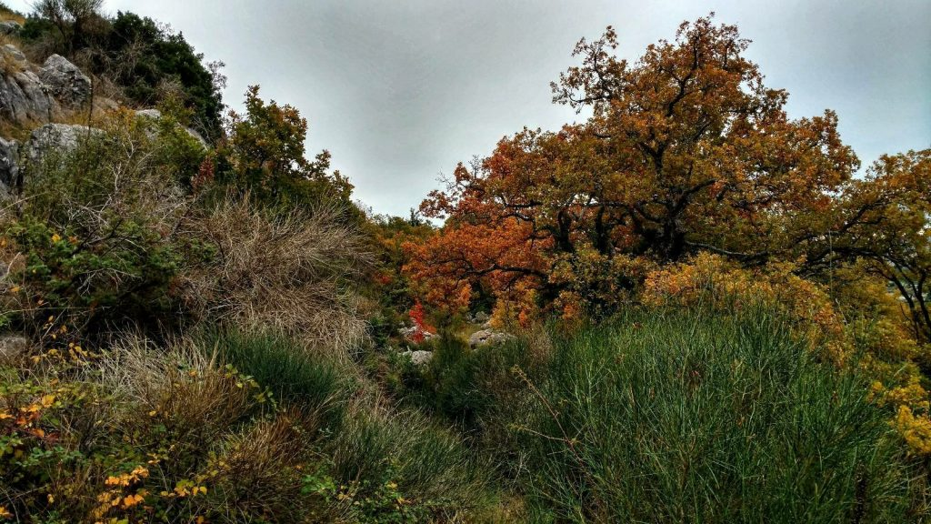 (Central) Dalmatia hiking trail