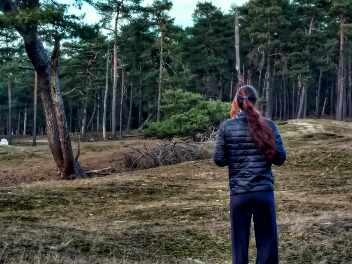 Birdwatching on the Utrechtse Heuvelrug