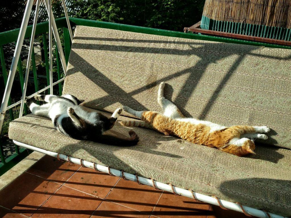 Hut life: cats in Ski Hut Gorica